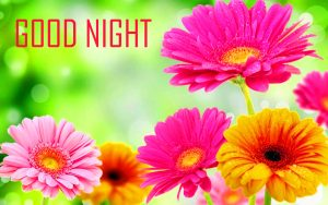 Good Night Images Pictures Download With Flower