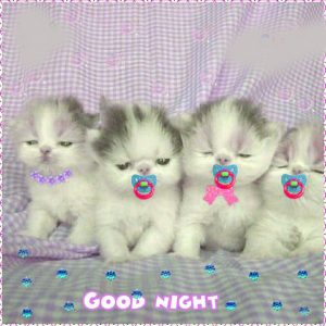 gd night images Photo Free Download