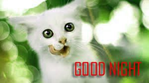 Cute Good Night Images Photo Wallpaper