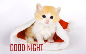 Cute Good Night Images Photo Pictures HD