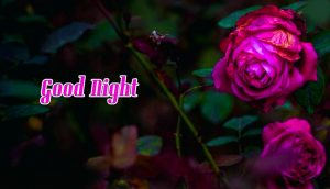 Flowers Good Night Images Pictures With Rose