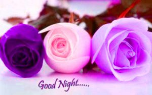 Flowers Good Night Images Wallpaper Download With Rose