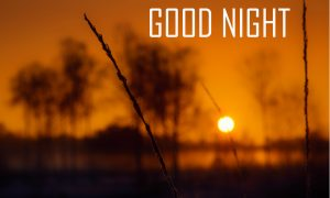 Latest HD Good Night Pictures For Best Friends Free Download