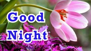 Free Good Night Images Photo With Flower Download