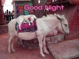 Funny Good Night Images Photo for Whatsaap