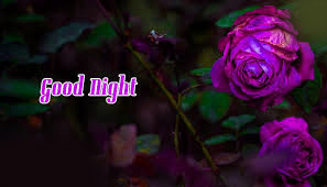 Good Night Wishes Greetings Images Wallpaper photo Pics Download