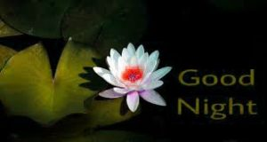Good Night Wishes Greetings Images Photo Pics With Flower Download