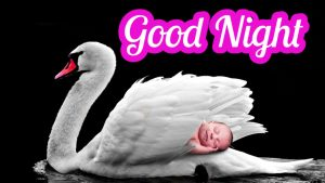 Good Night Wishes Greetings Images Wallpaper Photo HD Download