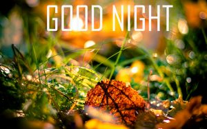 Friends Good Night Pictures Free Download
