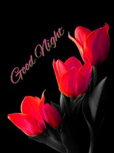 Good Night Images Photo Pic With Red Rose