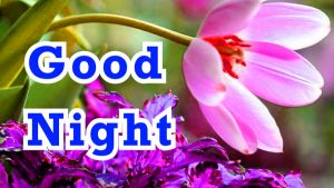 3D Good Night Images Photo pics With Flower