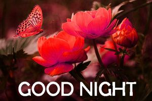 new good night images Photo Pictures Free Download In HD