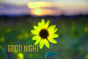 Good Night Images Wallpaper With Flower