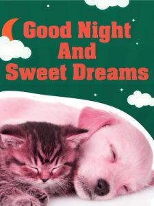 Romantic Good Night HD Images Photo HD Download