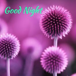 Latest Good Night Images Photo Pics For Whatsaap
