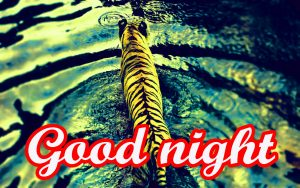 Amazing Good Night Images Photo Free Download