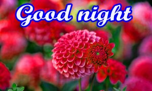 Flower Good Night Images Wallpaper Pics Download