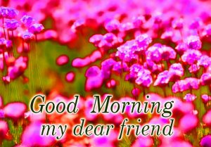 Best friends Good Morning  Wallpaper Photo Download