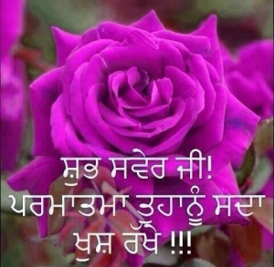 Punjabi Good Morning Images Photo Pics Wallpaper Pictures Download With Flower