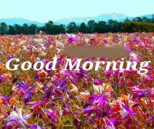 Post Card Good Morning Images Photo Wallpaper Pics HD Download