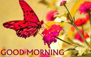 Butterfly Good Morning Images Download