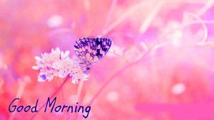 Butterfly Good Morning Images Pictures Photo HD