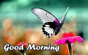 Butterfly Good Morning Images Pictures Photo