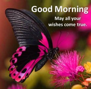 Butterfly Good Morning Images Photo Wallpaper