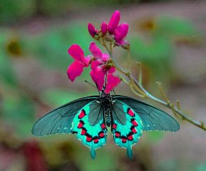 Butterfly Good Morning Images Pictures Photo Download