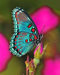 Butterfly Good Morning Images Wallpaper photo Download