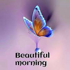 Butterfly Good Morning Images Wallpaper Photo Pics Download