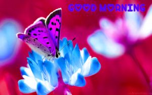Butterfly Good Morning Images Photo HD Download