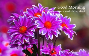 Thursday Good Morning Images Pictures Photo HD Download