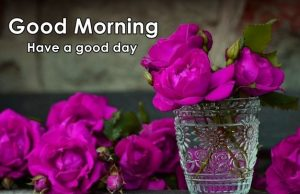 Wednesday Good Morning Images Wallpaper Pics Download