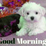 150+ Good Morning Images Wallpaper Pictures Pics For Puppy Lover
