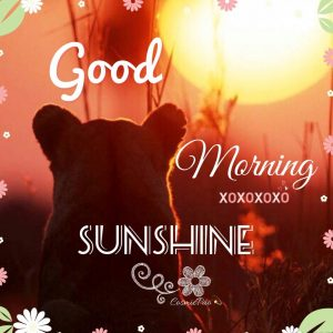 Good Morning Sunshine Images Pictures Photo Download