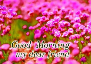 Good Morning Dear Friends Images Photo Pics HD Download