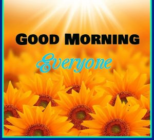 Sunflower Good Morning Images Photo HD Download