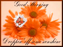 Sunflower Good Morning Images Photo Pics HD Download