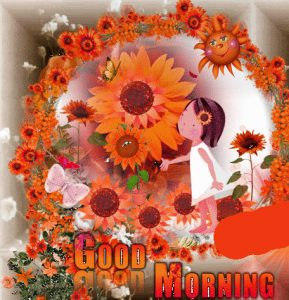 Sunflower Good Morning Images Photo Wallpaper Pictures Download
