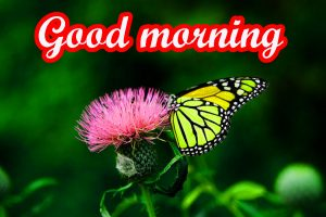 Butterfly Good Morning Images