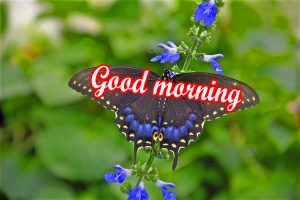 Butterfly Good Morning Images Photo Pics