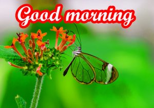 Butterfly Good Morning Images Wallpaper Pics HD Download