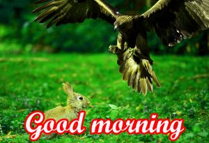 Cartoon Good Morning Images Wallpaper Pictures
