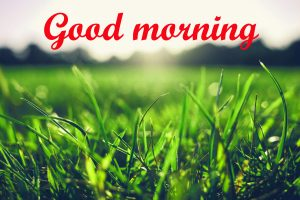 Good Morning Sunshine Images Pics Wallpaper