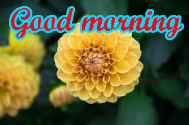 Special Good Morning Images Photo
