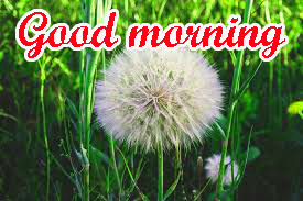 Special Good Morning Images Pics