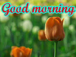 Special Good Morning Images Pictures Download