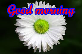 Special Good Morning Images Pics HD