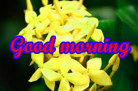 Special Good Morning Images pICTURES